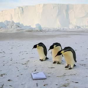 Antarctica Box