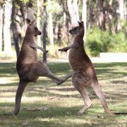 Australia New Zealand May 15